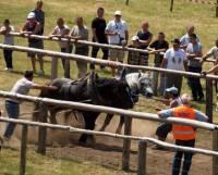 Konji vuku trupce-Ba�ke O�tarije