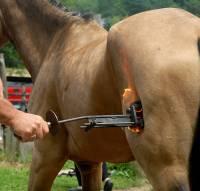 �igosanje konja