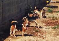 Indija - oslobo�eni psi iz laboratorija