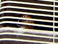 Undercover Beagle photo 6 [ 23.43 Kb ]