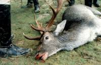 Source: A.R.M.O.R.Y - Killed deer [ 56.99 Kb ]