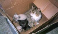 Kittens left in a box [ 32.14 Kb ]
