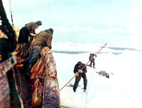 Seal hunt - hunters and the dead seal [ 84.71 Kb ]