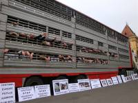 Protest against live animal transport 15 [ 122.28 Kb ]
