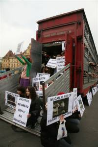 Protest against live animal transport 23 [ 87.08 Kb ]