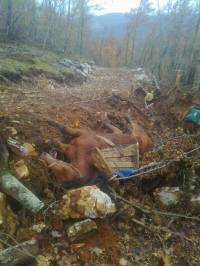 Abused horses - Velebit, Gracac 1