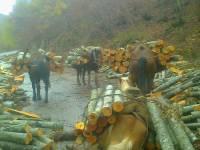Abused horses - Velebit, Gra�ac