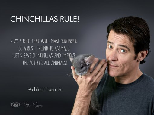 Chinchillas Rule - Goran Višnjić [ 777.36 Kb ]