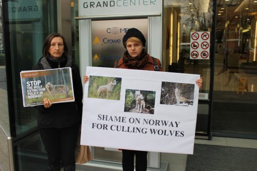 Demo against the massive wolf culling in Norway [ 182.79 Kb ]