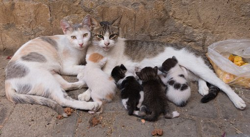 Cat and her babies [ 115.83 Kb ]