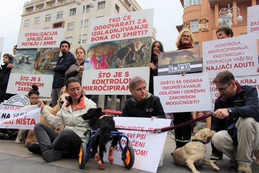 Action for Animal protection act anniversary [ 339.81 Kb ]