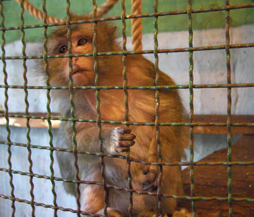 zoos pitiful dirty prisons essay