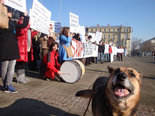 Protest for the implementation of the Animal Protection Act 1 [ 104.50 Kb ]