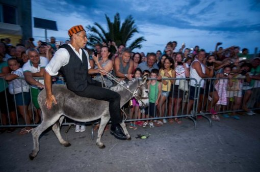 Jackass on a donke (Photo: Dusko Jaramaz, Pixell) [ 81.77 Kb ]