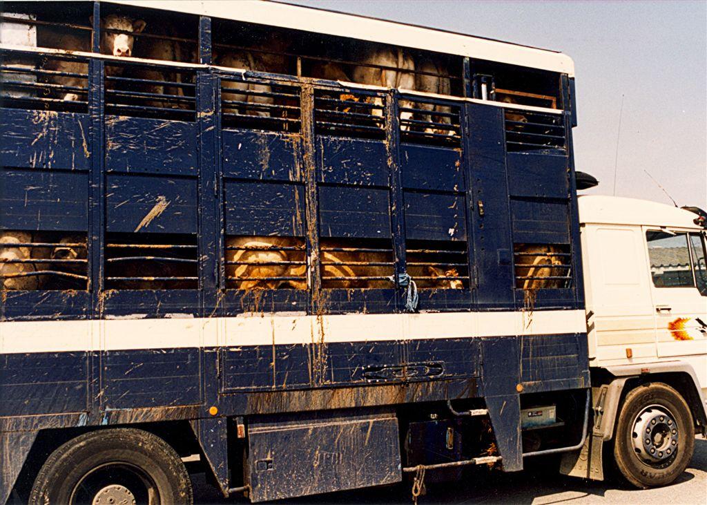 AFC - Live Animal Transport